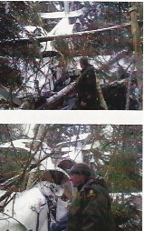 Pictures of wrecked plane in the trees
